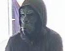 Robbery Suspect Gorilla Mask 1 - Crop
